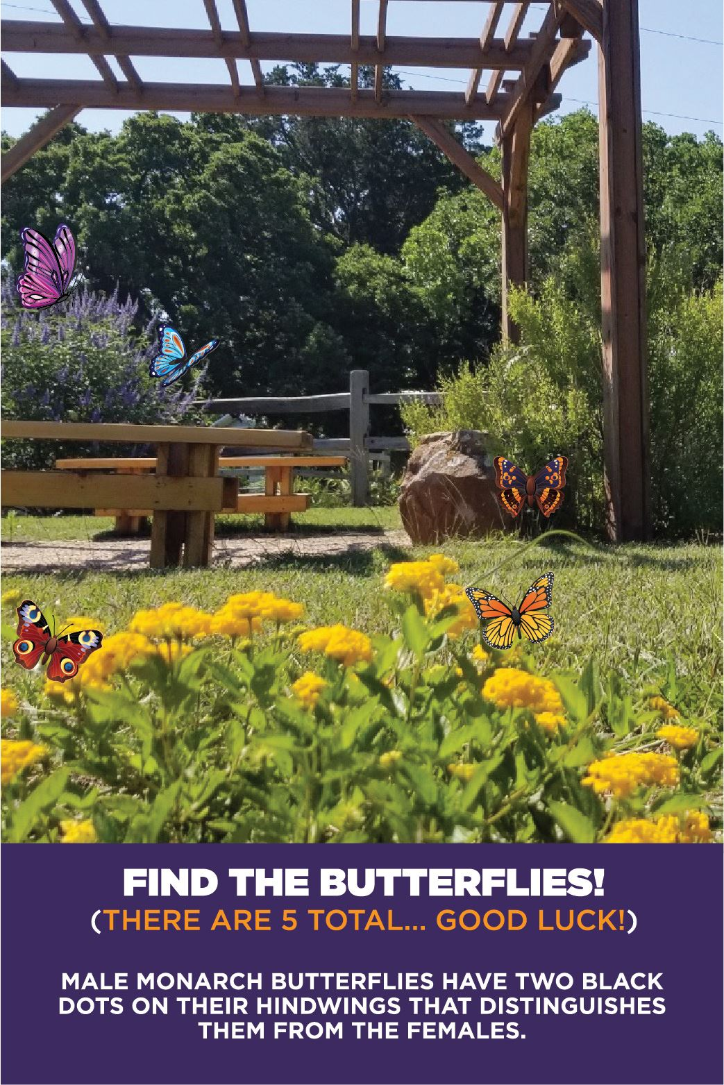 2020-Russell-Farm-Butterfly-Hunt-FB-VERTICAL-01-04